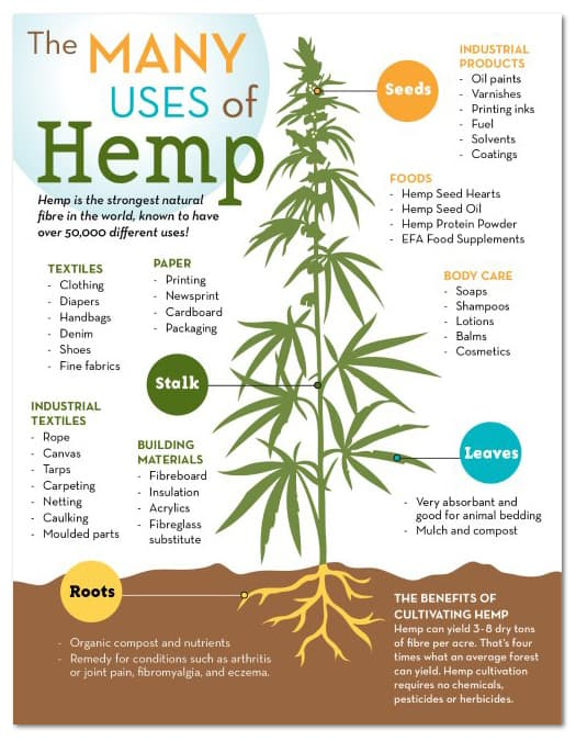 Hemp_Infographic_web